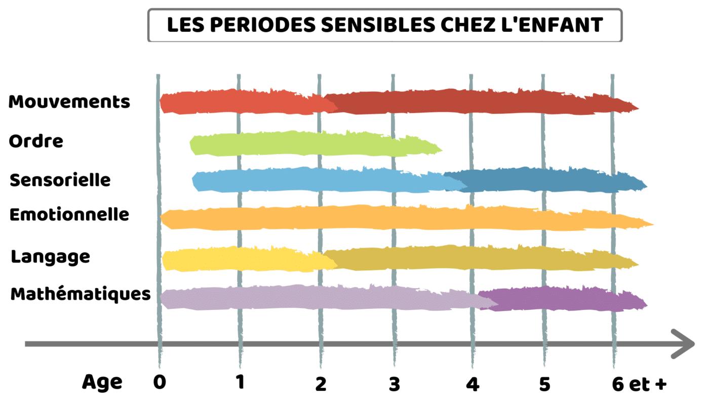 Periodes Sensibles Montessori
