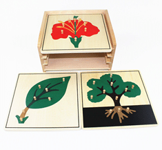 trois Puzzle botanique de la pédagogie montessori