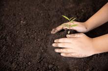 Enfant qui plante une graine, activité pédagogie Montessori