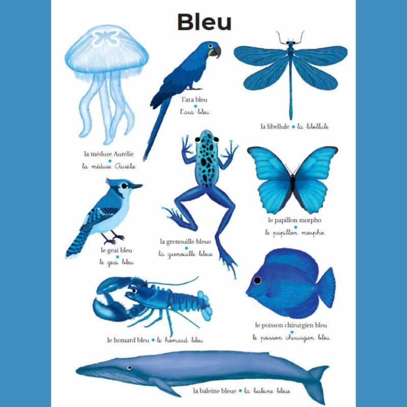 imagier géant du pere castor bleu
